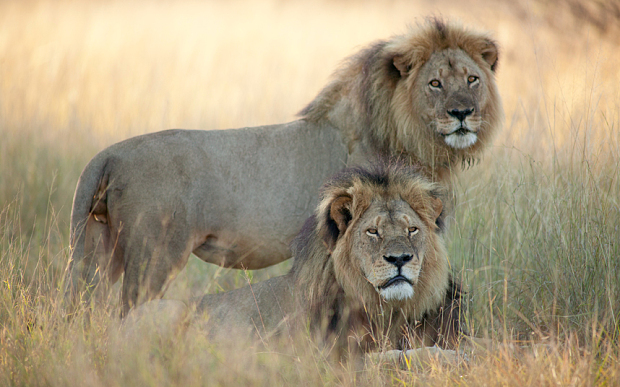 Cecil si Jericho, foto The Telegraph